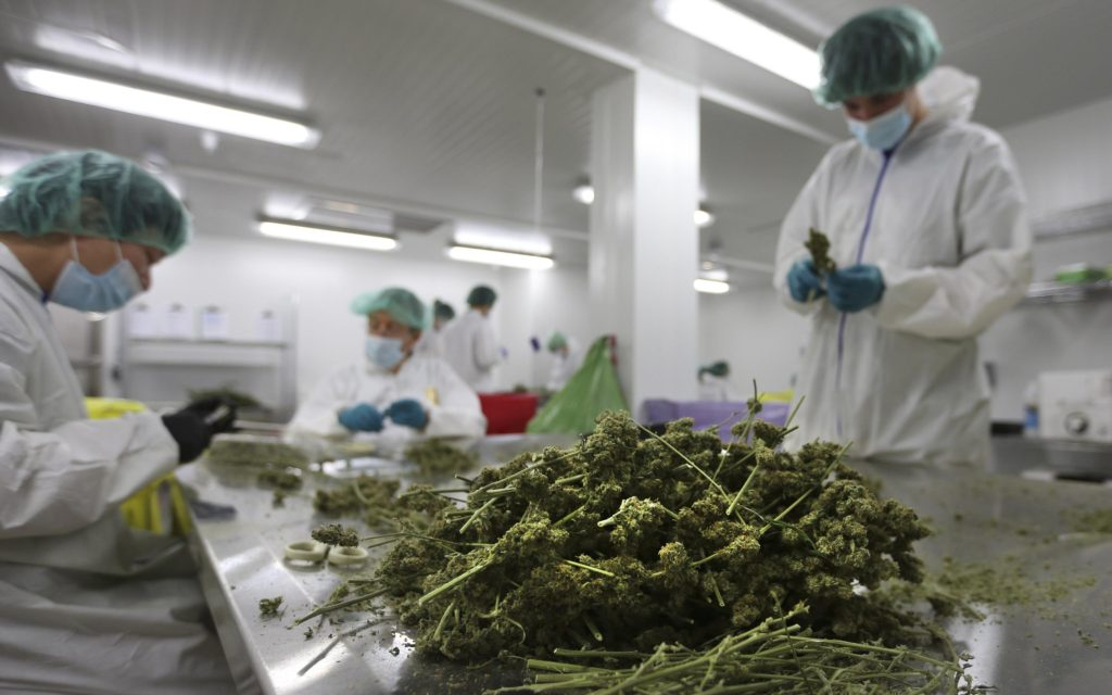 cannabis companies in Canada fighting labour shortage